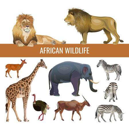 Ilustración de African wildlife: lions, zebras, antelopes, elephant, giraffe and ostrich. Vector illustration isolated on white background - Imagen libre de derechos