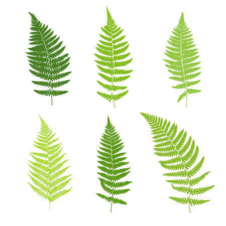 Illustration for Set of fern frond silhouettes. Vector illustration - Royalty Free Image