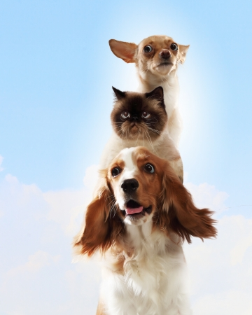 Three home pets next to each other on a light background  funny collage