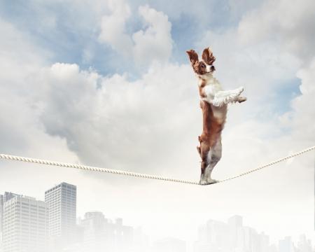 Image of spaniel dog balancing on rope