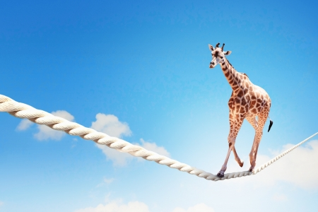 Foto de Image of giraffe walking on rope high in sky - Imagen libre de derechos