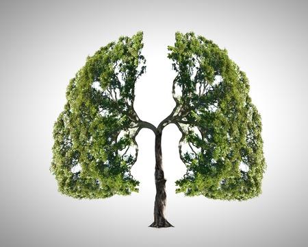 Photo pour Conceptual image of green tree shaped like human lungs - image libre de droit