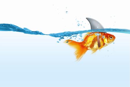 Foto de Little goldfish in water wearing shark fin to scare predators - Imagen libre de derechos