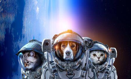 Photo pour Pets in astronaut suit in the space - image libre de droit