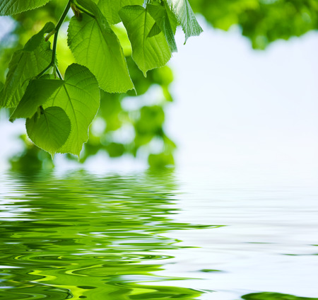 nature background - Leaves and water reflection