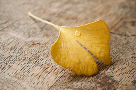 closeup of ginkgo biloba leaf on wooden background