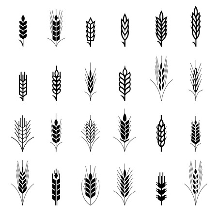 Wheat ear symbols for icon design. Agriculture grain, organic plant, bread food, natural harvest, vector illustration