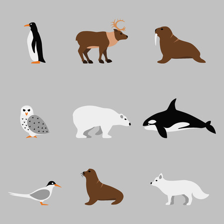 Arctic and antarctic animals set in flat vector style. Penguin and orca, owl and bear, walrus and deer illustration