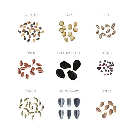 Plant seed flat vector icons set. Sunflower linen cumin apple turnip dill and water melon illustration