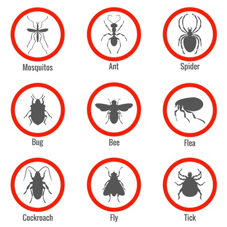 Pest and insect control, icons set. Tick and bee, bug and spider, fly and cockroach, flea and mosquito, vector illustration