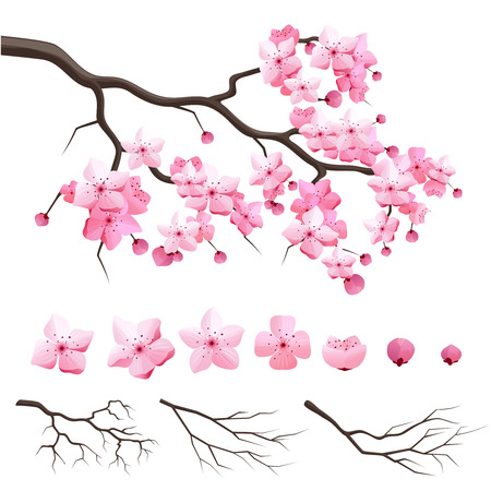 Illustration pour Vector japan sakura cherry branch with blooming flowers. Design constructor with blooming cherry branch - image libre de droit