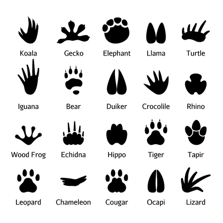Photo for Animal and reptile footprints vector. Set foot prints wild animals, illustration of black silhouette - Royalty Free Image