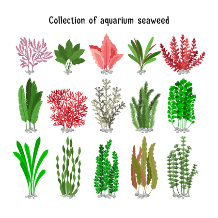 Seaweed set vector illustration. Yellow and brown, red and green aquarium seaweeds biodiversity isolated on white. Sea plants and aquatic marine algae
