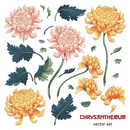 Illustration pour Set of elements of chrysanthemum flower to create designs. Japanese style. - image libre de droit