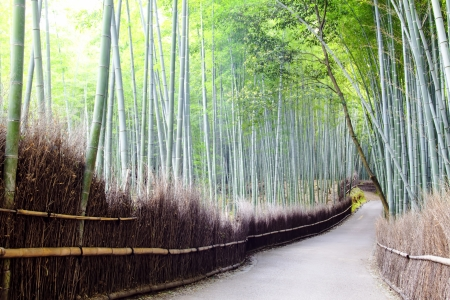 Arashiyama Bamboo Trails, Japan