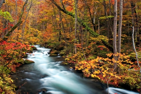 Autumn Colors of Oirase Stream at Aomori,Japan