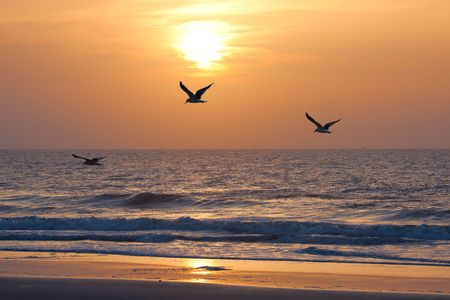 Photo for Sunset on the atkantic ocean. Florida, USA - Royalty Free Image