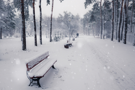 Benches in winter snowy park at snowfall dayの写真素材
