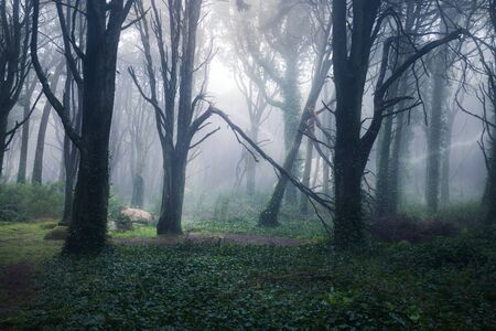 Photo pour Beautiful mystical forest in a summer morning. Scenery with path in dreamy foggy forest - image libre de droit