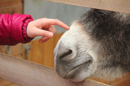 a finger caressing muzzle donkey