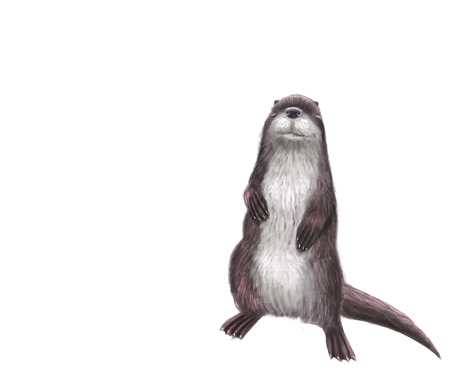 Digital toon  illustration of a otter isolated