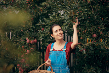 A woman with basket picking apples in autumn season