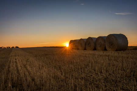 Photo pour An agricultural field at sunset in Denmark - image libre de droit