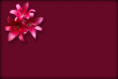 Photo pour Three isolate red lilies on the claret background with thin dark border - image libre de droit