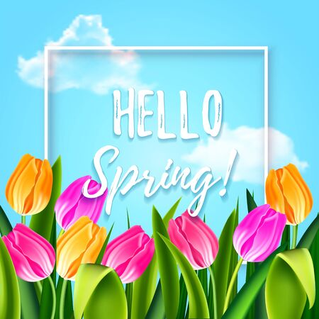 Illustration for Hello spring tulips flowers background with lettering and white frame. Template for greeting card with tulip bouquet, pink and yellow flowers on blue sky background. Vector illustration EPS10. - Royalty Free Image