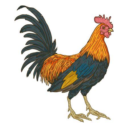 Illustration pour Vector Cartoon Rooster. Game-cock Illustration. - image libre de droit
