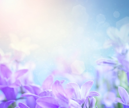 Beautiful spring background with campanula bouquet
