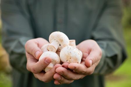 Organic mushrooms. Healthy food.