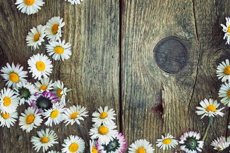 Spring background. Fresh daisies on wood. Nature background with copy space