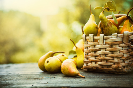 Autumn nature concept. Fall pears on wood. Thanksgiving dinnerの写真素材
