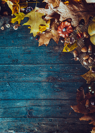 Thanksgiving autumn backgroundの写真素材