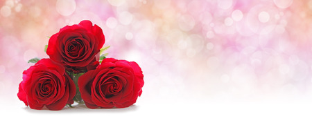 Photo for Three Beautiful Red Roses Website Header -  Three red rose heads stacked on left hand side on a misty pink peach colored bokeh background with plenty of copy space on right hand side - Royalty Free Image
