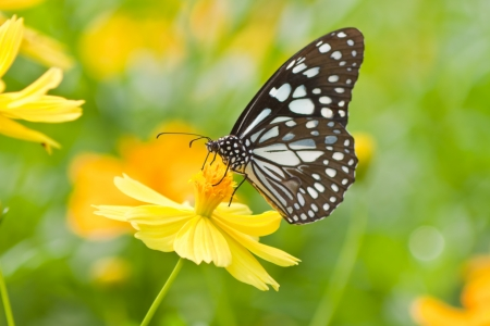 Photo for butterfly on flower - Royalty Free Image