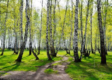 Springtime Trees