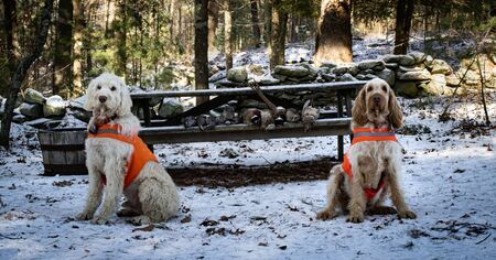 Two Hunting Dogs Sit By Their Catch Proudly