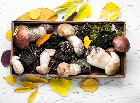 autumn harvest of forest mushrooms in a vintage box with forest moss