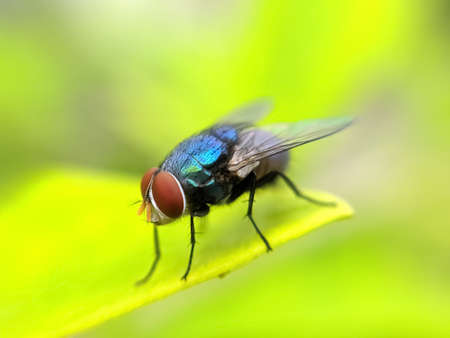 Photo for green leaves plant to sit housefly garden housefly - Royalty Free Image