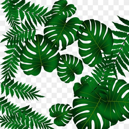 Illustration pour  Vector tropical pattern, bright tropical foliage, monstera leaves. Modern bright summer print design from thickets of tropical leaves from the jungle. - image libre de droit