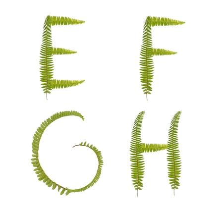 Beautiful Tree fern alphabet capital letter e-h
