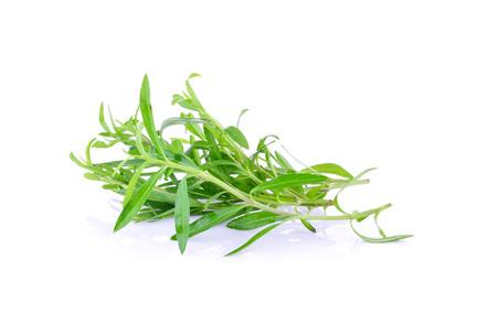 Tarragon herbs on white background