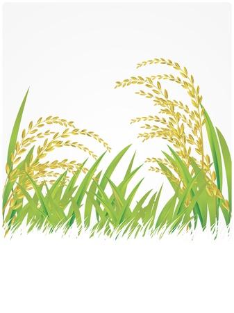 rice, thai, Thailand, white, illustration, Jasmine Rice