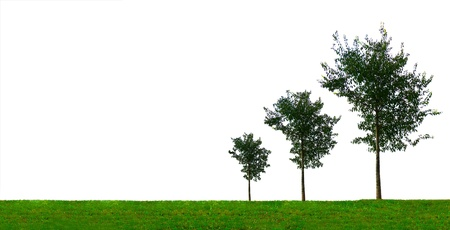 Growth concept with three growing trees of different size  On white background