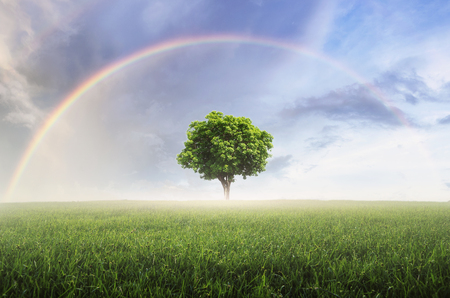 Photo pour Rainbow after the rain, the skies over the beautiful green meadow, with lonely tree. - image libre de droit