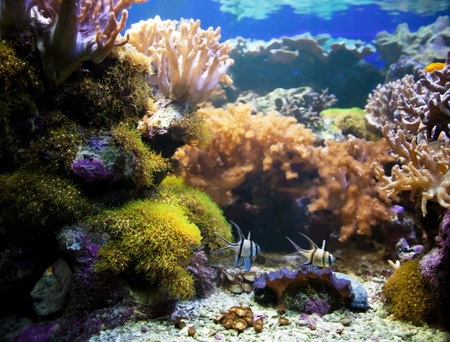 Underwater life. Coral reef, fish, colorful plants in ocean
