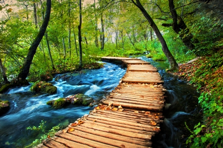 Photo pour Deep forest stream. Crystal clear water. Plitvice lakes, Croatia - image libre de droit