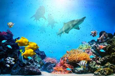 Underwater scene. Coral reef, colorful fish groups, sharks and sunny sky shining through clean ocean water. High resolution